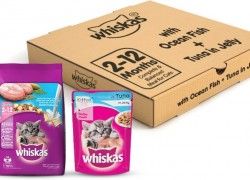 Whiskas Kitten Combo – Ocean Fish Flavour, 1.1 kg (Pack of 2)+ Wet Cat Food, Tuna in Jelly, 85 g (6 Pouches) Fish 2.71 kg Dry New Born Cat Food